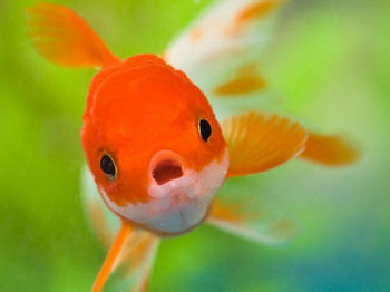 goldfish Blog - Attention Deficit Training Neurofeedback Tool | Play Attention